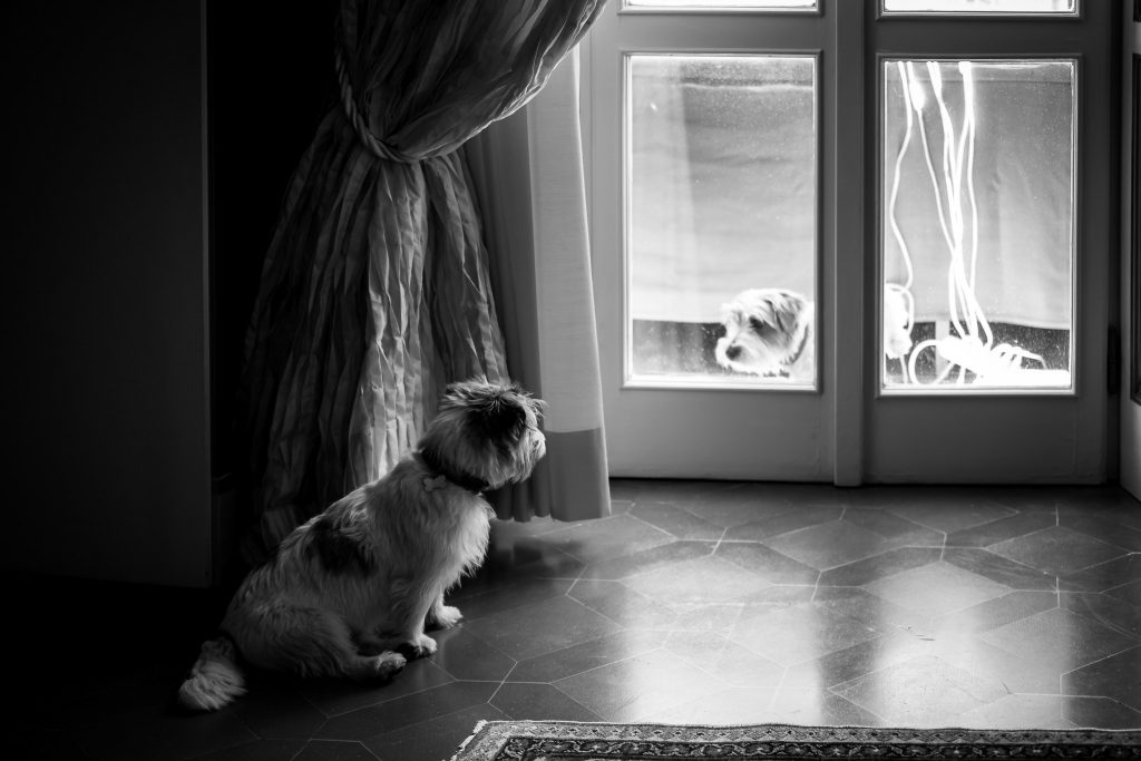 cani-si-guardano-durante-la-preparazione-della-sposa